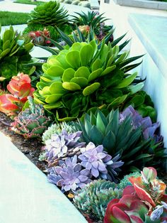 Cheap landscaping ideas for your front yard that will inspire you – Lovelyving - small front yard landscaping ideas Small Front Yard Landscaping, Succulent Landscaping, Succulent Gardening, Cacti And Succulents, Planting Succulents, Backyard Landscaping, Succulent Ideas, Landscaping Design, Landscaping Software