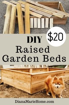 Diana Marie Home: A DIY raised garden bed makes gardening tasks much easier. I will show you how I make my DIY raised beds on a budget. Cheap Raised Garden Beds, Raised Garden Bed Plans, Building Raised Garden Beds, Raised Flower Beds, Diy Garden Bed, Garden Boxes, Easy Garden, Raised Beds, Garden Bed Layout
