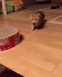 Cat Moves with Front Paws