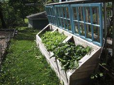 Raised Beds with Old Windows for Cold Frames. Colorado Backyard Urban Gardening & Farming. http://www.EdwardsYards.com