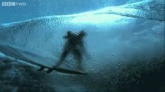 Discover & share this Surfing GIF with everyone you know. GIPHY is how you search, share, discover, and create GIFs. Giant Waves, Big Waves, Surfing Tumblr, Girl Surfing, Earth Hd, Waving Gif, Underwater Video, Swimming Party Ideas, Soul Surfer