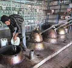 Distillation of rose in Iran