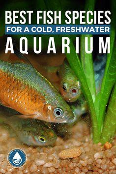 Best Aquarium Fish, Tropical Fish Aquarium, Aquarium Ideas, Planted Aquarium, Outdoor Fish Tank, Outdoor Ponds, Fish Tank Fresh Water, Water Tank, Fish Tank Terrarium