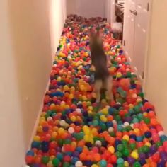 He made his dog the happiest dog in the world with ball pit balls Cute Funny Animals, Cute Baby Animals, Funny Dogs, Animals And Pets, I Love Dogs, Cute Dogs, Cute Babies, Cute Animal Videos, Funny Animal Pictures