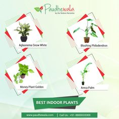 Shop for the best online plant as per your affordability. Best online plant nursery in Delhi NCR to give you wonderful choices - Best nursery services. For more details call us on 7406109286 Cheap Plants Online, Buy Indoor Plants Online, Best Indoor Plants, Outdoor Plants, Online Plant Nursery, Dracaena Plant, Money Plant, Flower Window, Unique Gardens