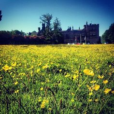 Armathwaite Hall Hotel and Spa - June buttercups