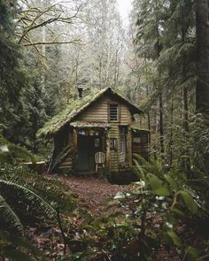 🐝Explore Awesome Weekend Travel Ideas for Nature Adventure,Forest Fantasy,Sustainable Day,In Ontari Dark Green Aesthetic, Nature Aesthetic, Witch Aesthetic, Cabin In The Woods, Cottage In The Woods, Forest Cabin, Forest House, House Trees, Nature Adventure