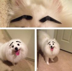 Bored? Try putting eyebrows on your pet. Boredom will officially be trumped!