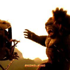 Variety: 'Kong: Skull Island' Roars to Massive $22.5 Million Opening in China. Link: http://variety.com/2017/film/news/kong-skull-island-box-office-opening-china-1202015810/