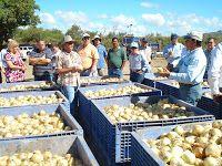 AgrotemasOnline: 08-feb-2009 Puerto Rico, Commercial Farming, Food, Caribbean, Essen, Meals, Yemek, Eten