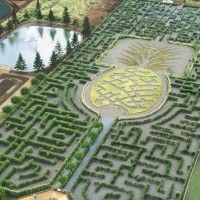 """In 2008, Dole Plantation's giant Pineapple Garden Maze was declared the world's largest maze. The maze stretches over three acres and includes nearly two and one-half miles of paths crafted from 14,000 colorful Hawaiian plants. Walk through the flora of the islands as you seek out eight secret stations that each lead you closer to the mystery at the heart of this larger-than-life labyrinth, one of only a handful of permanent botanical mazes in America."""