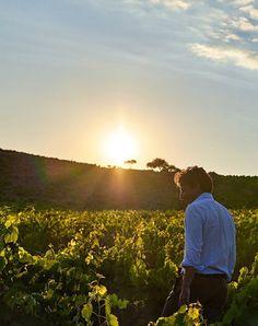 Alberto Tasca of Tasca d'Almerita winery, in the heart of Sicilian wine country