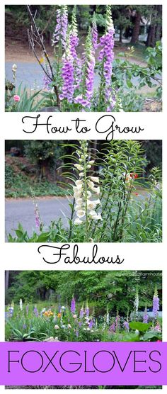 tips on foxgloves, a shade-loving cottage garden plant. I especially like the idea that you can plant different varieties and they cross-pollinate to create surprise variations. I also like that they reseed and end up all over the place.