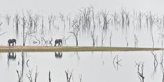 Visist: Lake Kariba, Zimbabwe?