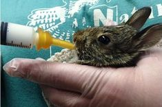 Rabbit, Board, Animals, Bunny, Rabbits, Animales, Animaux, Bunnies, Animal