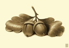 Lovely acorns speed painting by Denis Zilbert Denis Zilber, Speed Paint, Acorn, Illustrators, Illustration Art, Projects, Painting, Color, Log Projects