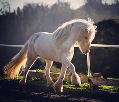 """2,909 gilla-markeringar, 22 kommentarer - Kathy Sierra (@intrinzen) på Instagram: """"Draumur showing off for the horses in the pasture. If we want them to be expressive, we need to be…"""""""