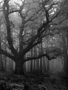 Haunted looking forest.