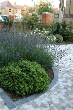 Pittosporum and lavender - for the front garden