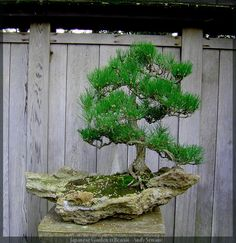 Japanese Garden 11 Bonsai by *AndySerrano on deviantART