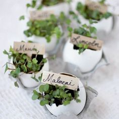 A cute and simple easter gift diy plant up eggshells with tiny 1001 usages et ides rcup avec une coquille doeuf negle Choice Image