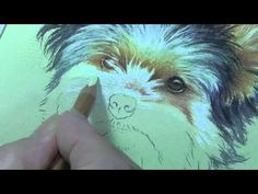 "Pastel Demonstration - Yorkie by Roberta ""Roby"" Baer PSA - YouTube"