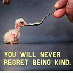 #kindness #regret #animals #vegan #empathy #respect #love