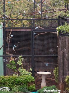 Texasdaisey Creations: My Garden...a garden isn't complete without an aviary filled with beautiful birds to sing for you.