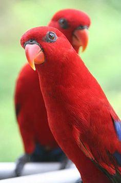 #red #bird