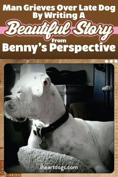 Seriously the most absolute beautiful heart-wrenching story from a heartbroken dog parent. Thank you so much to the author! It was like the story was written by my Dori Girl 💔 Memorial Poems, Dog Memorial, Diy Dog Gifts, Animal Pick, Touching Stories, Picture Story, Dog Crafts, Beautiful Stories, Dogs Of The World