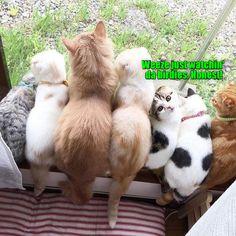 Kitties will be kitties