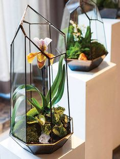 Building a DIY terrarium only takes a few minutes and you can inject plenty of creativity and individual style into your piece. This is a great project to..