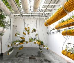 "A Hydroponic Vision For The Future Of Architecture |     Air pots, hydroponics, and ""earthless cultivation,"" at the Spanish pavilion of the 13th Venice Biennale Architecture Exhibition, 2012."