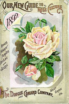 Catalog Information    Company Name:  Dingee & Conard Co.    Catalog Title:  Our New Guide to Rose Culture (1892)  Publication Information:  West Grove, PA  United States  Category(ies) of Cover Art:  Roses