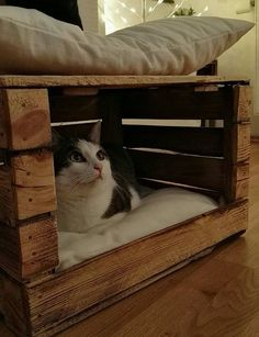 Dog bed dog basket cat furniture cat bed cat cave cat box wooden box Basket and Crate Pet Beds, Dog Bed, Diy Dream Catcher, Cat Crate, Crate Bed, Cat Basket, Dog Furniture, Luxury Furniture, Furniture Removal