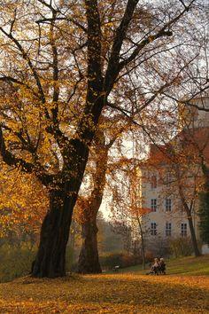 Autumn in Provence, France Autumn Cozy, Autumn Hill, Autumn Aesthetic, Best Seasons, Parcs, Autumn Inspiration, Fall Season, Harvest Season, Fall Harvest