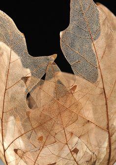 À l'époque ou l'urbanisation galopante tend à isoler l'Homme de la nature, des artistes comme Kay Sekimachi mettent un point d'honneur à faire des matériaux naturels, le poi…