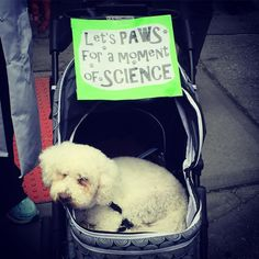 """47 Likes, 2 Comments - leigh greaney (@occupy_octopi) on Instagram: """"🐶🌎🔬#marchforscience #earthday #doggo"""""""