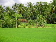One of my friend's village house..