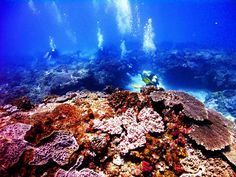 Fabulous viz (visibility) on a reef at Sodwana Bay, South Africa Somewhere Over, Soft Corals, Over The Rainbow, Scuba Diving, East Coast, Good Times, Underwater, South Africa, Paradise