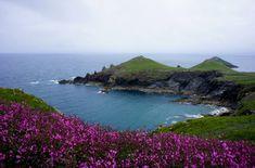I fiori, e attorno, l'aria pungente del mare increspato: la primavera tra le scogliere della Cornovaglia (Inghilterra).
