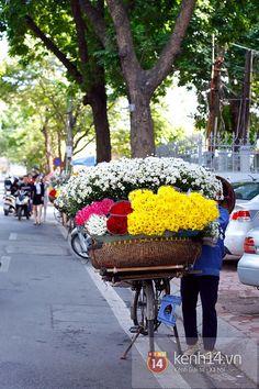 Một mùa cúc họa mi nữa lại về trên phố Hà Nội... 16