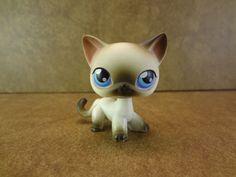 #5 Siamese Cat 2004