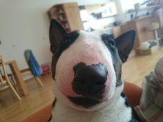 #piggy#nose