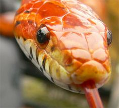 Man Dies After Trying To Consume Snake Venom By Sucking On Snake Head