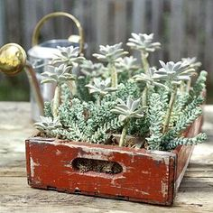 Indoor Container Gardening - Succulents make excellent container plants because they're easy to grow and need almost no care. Check out our 14 ideas for succulent containers. Recycling Containers, Succulents In Containers, Container Plants, Succulents Garden, Container Gardening, Flower Containers, Succulent Gardening, Vegetable Gardening, Indoor Gardening Supplies