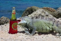 Photo by Randall D. - This iguana on Bonaire knows what it takes to be a castaway!
