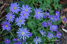 Frühlingsblüher # violette Blüten # Farbenreich