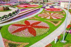Jardin des miracles Dubaï 4