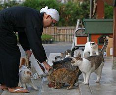 修行僧らが朝ご飯を運んできた!猫たちは待ちきれず「ニャーニャー」と大合唱=11月13日、福井県越前市の御誕生寺(尾崎修二撮影)